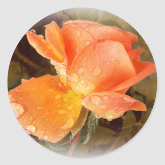 Raindrops on Roses..... Classic Round Sticker
