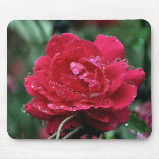 Raindrops on Roses Mouse Pad