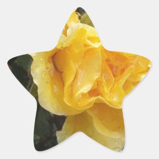 Raindrops on Roses - Yellow Rose Star Sticker