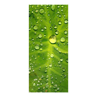 Raindrops on taro leaf rack card