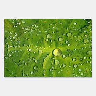 Raindrops on taro leaf sign
