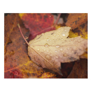 Raindrops on the October leaf Panel Wall Art