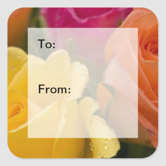 Raindrops on Yellow Orange and Pink Rose Gift Tags Square Sticker