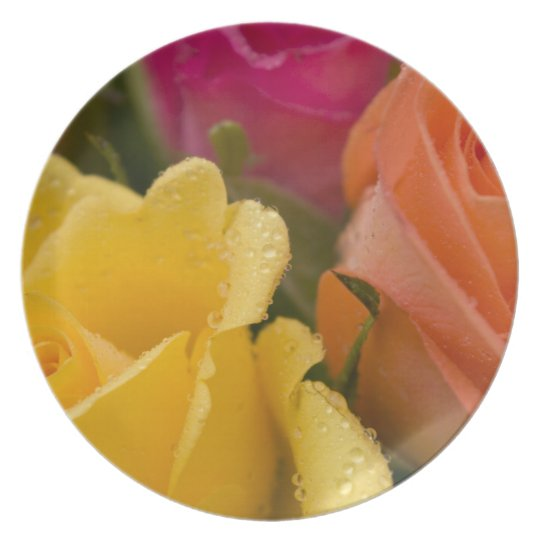 Raindrops on Yellow Orange and Pink Roses Melamine Plate