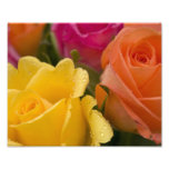 Raindrops on Yellow Orange and Pink Roses Photograph