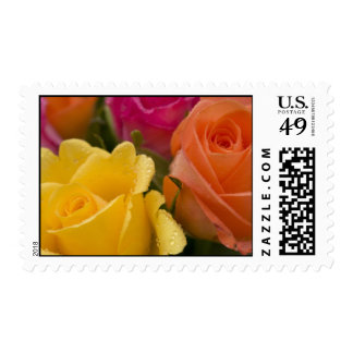 Raindrops on Yellow Orange and Pink Roses Stamp
