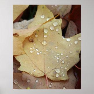 raindrops print