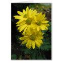 Rainflowers card