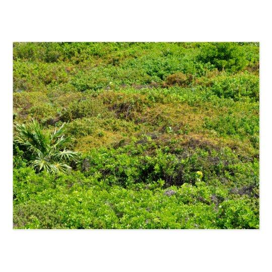 Rainforest Background Postcard