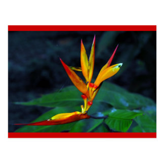 Rainforest Bloom Postcard