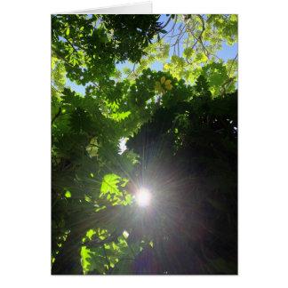 Rainforest Canopy Card