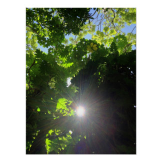 Rainforest Canopy Poster