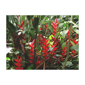 Rainforest Heliconia Canvas Print