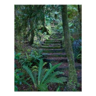Rainforest Invite