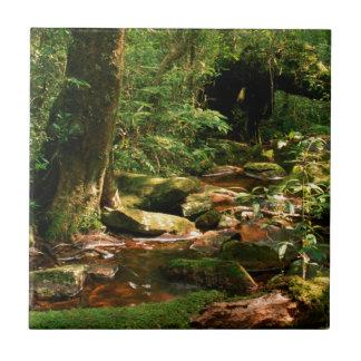 Rainforest Jungle Stream Landscape