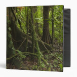 Rainforest, Mapari River North Rupununi, Binders