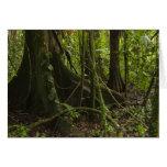 Rainforest, Mapari River North Rupununi, Greeting Card