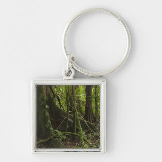 Rainforest, Mapari River North Rupununi, Keychain
