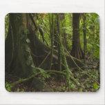 Rainforest, Mapari River North Rupununi, Mouse Pad