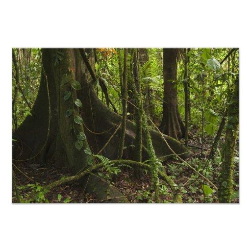 Rainforest, Mapari River North Rupununi, Photo Print