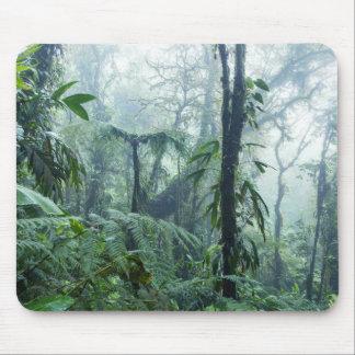Rainforest, Monteverde Cloud Forest, Costa Rica Mouse Pad