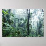 Rainforest, Monteverde Cloud Forest, Costa Rica Poster
