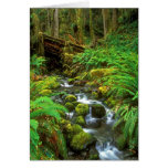 Rainforest Olympic NP Greeting Card