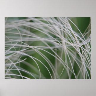 Rainforest Palm Tree Leaf Close Up Poster