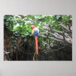 Rainforest Parrot Poster