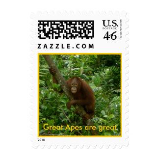 Rainforest Postage Stamp