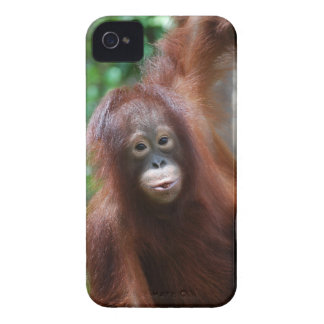 Rainforest Redhead Orangutan Case-Mate iPhone 4 Case