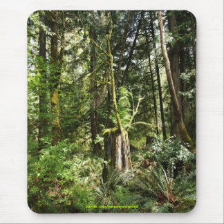 Rainforest Scene Wilderness Nature Photo Mousepad