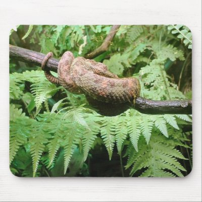Rainforest Snake Wrap - mousepad by Horseshoes3