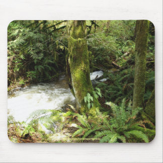 Rainforest Stream Wilderness Nature Photo Mousepad