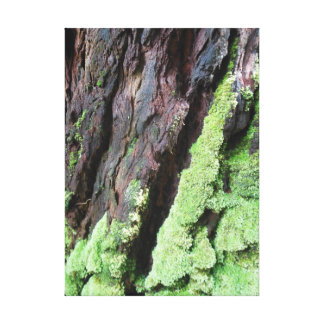 Rainforest Tree Bark and Moss Canvas Print