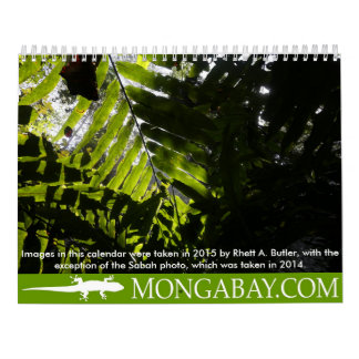 Rainforest trees calendar