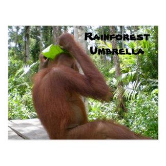 Rainforest Umbrella Post Cards