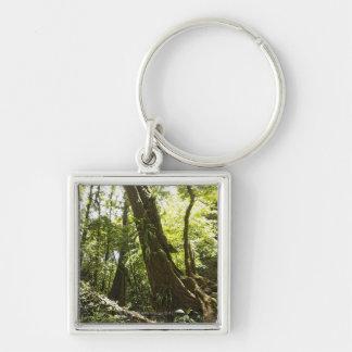 rainforest view, Dominica Keychains