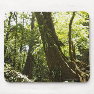 rainforest view, Dominica Mouse Pad