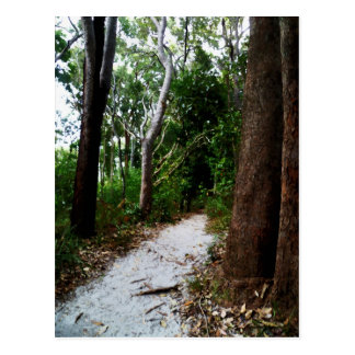 Rainforest watercolor effects postcard