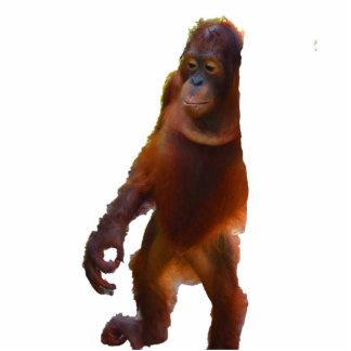 Rainforest Yoga Wildlife Statuette