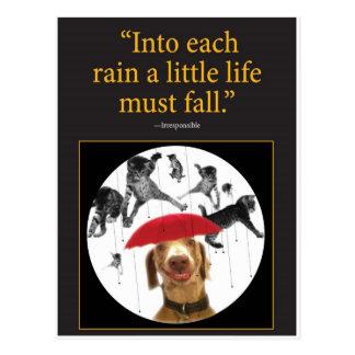 Raining Cats! Postcard