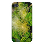 Raintree plant in bloom Green leaves iPhone 4/4S Cover