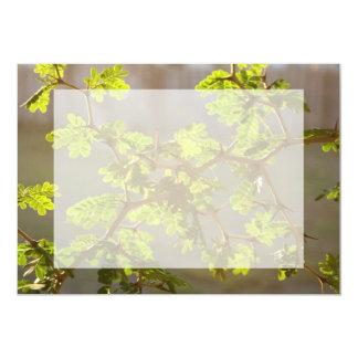 """Raintree ramifica foto de los bonsais invitación 5"""" x 7"""""""
