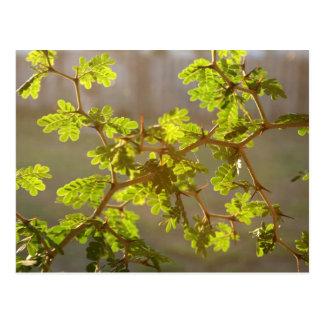 Raintree ramifica foto de los bonsais tarjeta postal