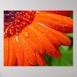 Rainy Daisy Print