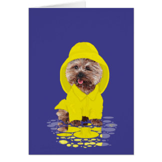 Rainy Day Cairn Terrier Card