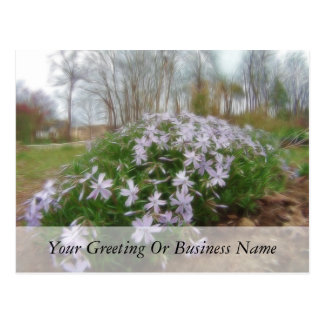 Rainy Day Creeping Phlox Postcard