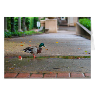 Rainy Day Duck Balboa Park San Diego Card