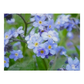 Rainy Day Forget Me Nots Poster